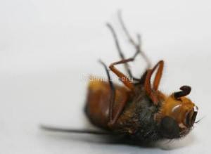 joanne-emery-dead-bee